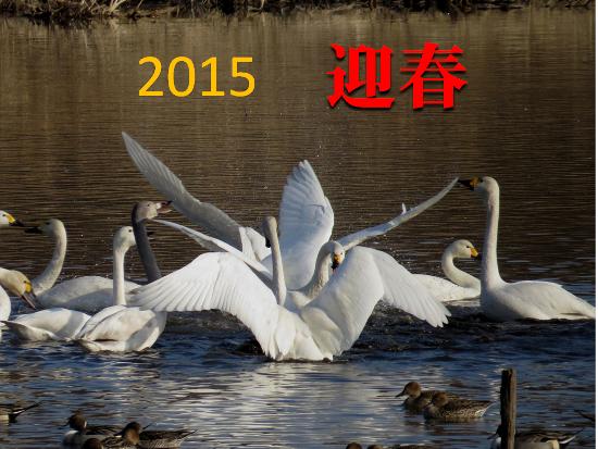 2015迎春.png